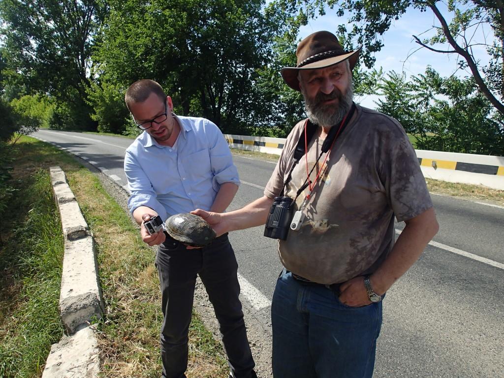 På vei til et arbeidsmøte møtte vi denne skilpadden som pent måtte geleides over veien, her med kyndig hjelp av Anders Foldvik og Jan Ove Gjerstad (Foto: Eline Hegvik/SINTEF)