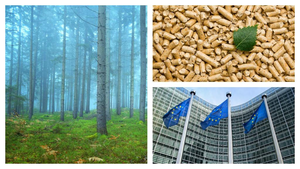 eera bioenergy