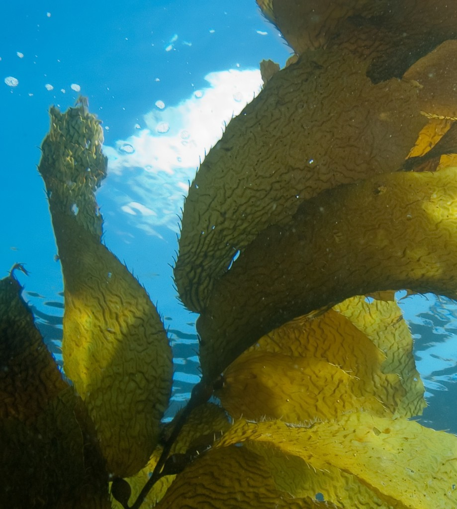 seaweed_shutterstock_109182521