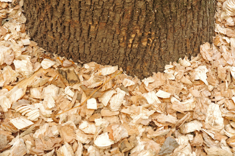 wood chips_shutterstock_88114852