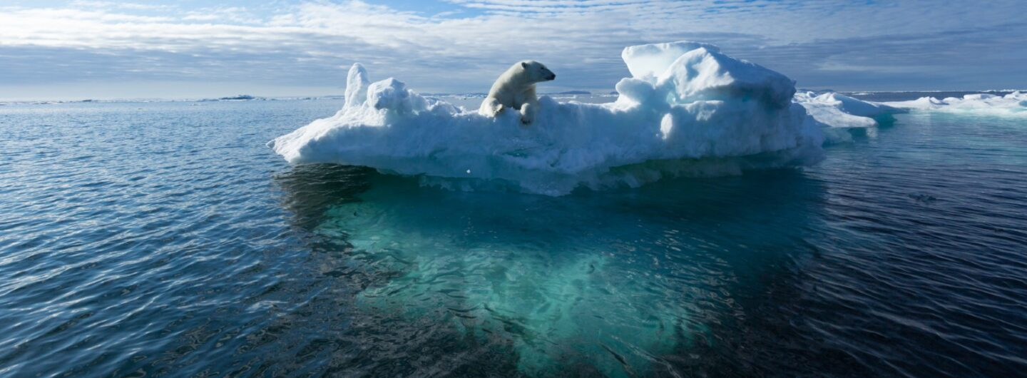Polar bear on melting sea ice illustrating the climate crisis