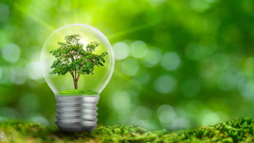 Lightbulb containing tree, on forest floor